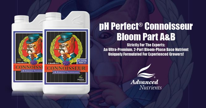 pH Perfect Connoisseur Bloom A+B